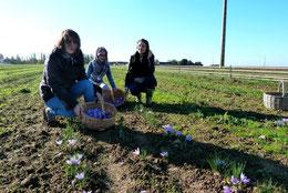 Trois étudiantes du pôle universitaire d'Eure-et-Loir accueillis par Safran De Smet dans notre safranière