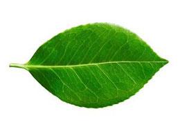 leaf-painter_s_blog