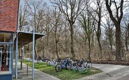 Die KGS liegt direkt gegenüber dem kleinen Stadtwald Papenholz – für die favorisierten Bauvarianten müssten viele Bäume gefällt werden. Eggers