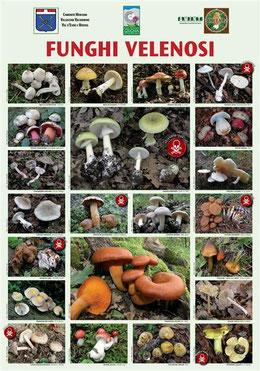 Avvelenamento da funghi: i funghi più velenosi
