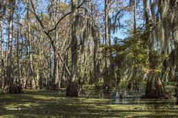 Le bayou : la grande région marécageuse du sud de la Louisiane