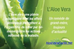 L'aloe vera remède de « bonne femme ou de grand mère »  AloeVeraSante.net