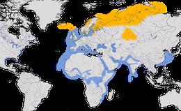 Karte zur Verbreitung der Heringsmöwe (Larus fuscus)