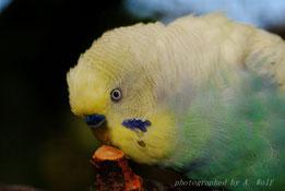 Pupille verkleinert sich, Irisring wird größer durch Erregung/ Begeisterung