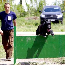 собаки Тольятти