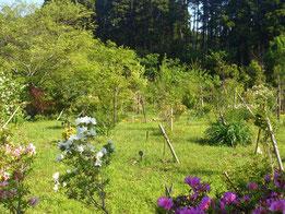 つつじが綺麗な季節です。つつじに囲まれた第一樹木葬地