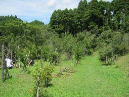 お盆に向けて気持ちよくお参り頂けるよう、草刈りしました。第一樹木葬地
