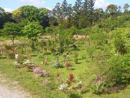 休憩所から臨んだ第二樹木葬地