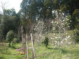 天徳寺第一樹木葬地