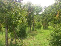 木々もぐぐっと成長する季節です。第二樹木葬地