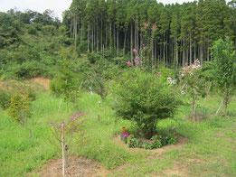 夏の花と秋の花が一緒に咲く時期です。第三樹木葬地