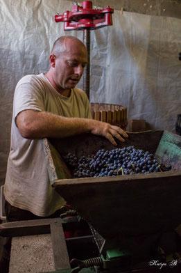 Foulage manuel des raisins avant pressurage - AOC Côtes de Toul - Jan Tailler - L'Arbre Viké