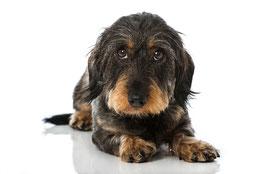 Hundeportrait, Foto: © DoraZett, Fotalia