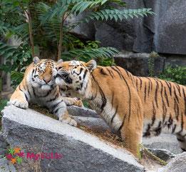 Schmusende Tier im Zoologischen Garten Berlin