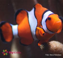 Clownfisch im Aquarium Berlin
