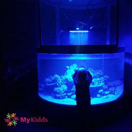 Kind vor leuchtendem Aquarium