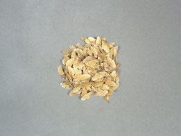 Ausschlaggebend für eine gesunde Pflanze ist Saatgut in einwandfreier Qualität ( Samen Fächerahorn )