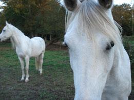 Soins aux animaux et communication animale à distance Sandrine Fournier Nature et Sens Agen / Bon-Encontre (47- Lot et Garonne - Aquitaine)