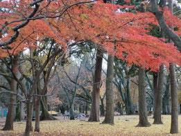 ●紅葉(武蔵野公園)