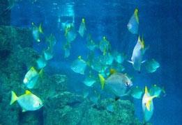 Bild: Referenz, 170.000l-Atlantikaquarium
