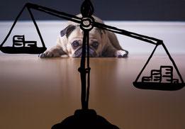 Hundekot und Hundesteuer