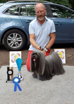 BOB Lhasa Apso Multi ch. Merriott's Fair Play