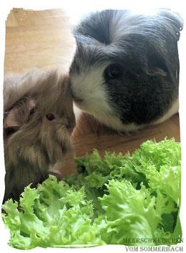 Alf mit Gustel, Foto Familie Dippel