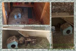 Elrond und Pandora im neuen Zuhause