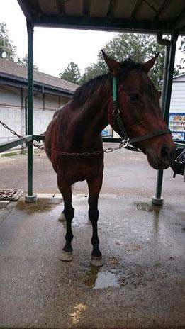 乗馬体験 馬