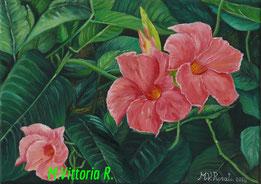 mandevilla aphrodite, oil on canvas, cm 25x35, 2014