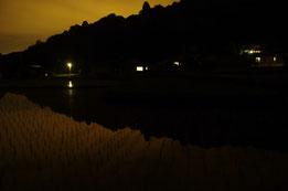 水田に映る外灯
