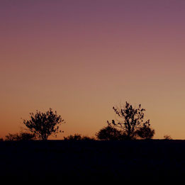 Sunset Desert Vegetation