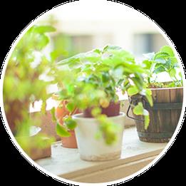 植物の活性化に