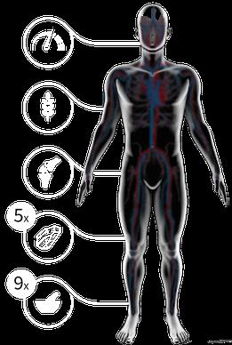 Wichtige Bestandteile für einen funktionsfähigen Körper