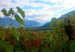 Rheintal (Foto: Peter Züllig)