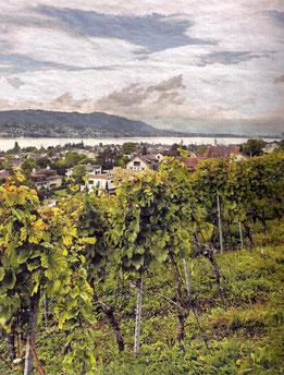 Sicht über den Zürichsee bis zur Stadt: Das Wengut Diederik in Küssnacht. (Foto: Anna-Tia Buss)