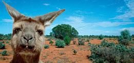 www.smithsonianmag.com/evotourism/evolution-world-tour-kangaroo-island-australia (Foto:  Robert Harding)