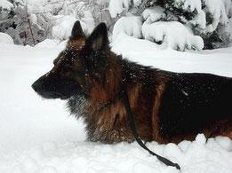 Schnee im März 2003