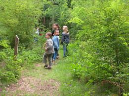 les indices de vie dans la forêt