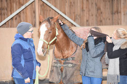 Pferdeseminar im Bachelorstudiengang Witschaftspsychologie (Bachelor of Science)