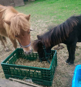 Notfall-Ponys