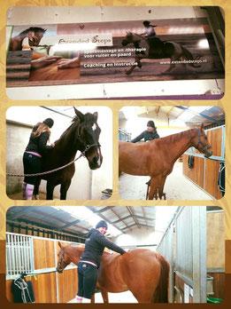 Wendy Klarenbeek, Sportmassage en -therapie voor ruiter en paard - Extended Steps