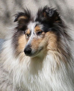 Picture: Milesian Collies