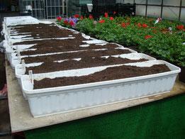 bepflanzte und mit Erde gefüllte Balkonkästen