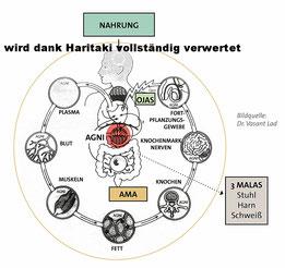 #Verdauungstrakt #Verdauung unterstützen #Haritaki #ayurvedisches Mittel #Abführmittel #Verstopfung #Blutreiniger #Leber reinigen #Haritaki Pulver #readyforyoga.ch #
