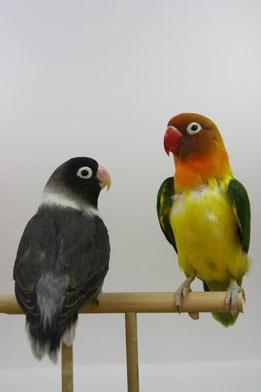 Posibles errores: comprar híbridos y mezclar especies