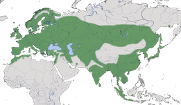 Karte zur weltweiten Verbreitung der Kohlmeise (Parus major)