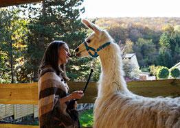 Coaching to go, Beratung im Gehen, Lamawanderung, tiergestützte psychologische Beratung mit Lamas, Lebens-und Sozialberatung, tiergestützte Interventionen, Lamawanderung, Lama Mama, Sommerein, Niederösterreich