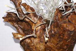 Lichtwurzel Detail Wurzel