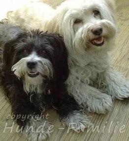Nelly & Sunny, Havaneser